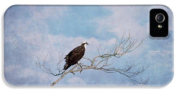 Osprey On Tree Branch IPhone 5 Case by Kim Hojnacki