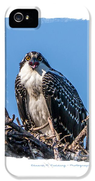 Osprey iPhone 5 Case - Osprey Surprise Party Card by Edward Fielding