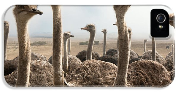 Ostrich Heads IPhone 5 Case by Johan Swanepoel