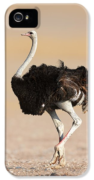 Ostrich iPhone 5 Case - Ostrich by Johan Swanepoel