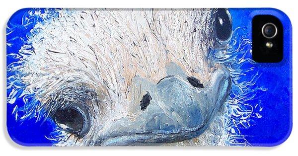 Ostrich Painting 'waldo' By Jan Matson IPhone 5 Case by Jan Matson