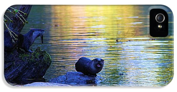 Otter Family IPhone 5 / 5s Case by Dan Sproul