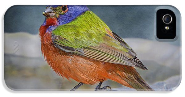 Painted Bunting In April IPhone 5 Case by Bonnie Barry