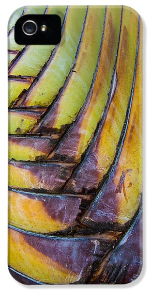 Palm Tree Abstract IPhone 5 / 5s Case by Sebastian Musial