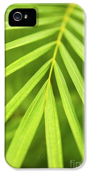 Palm Tree Leaf IPhone 5 Case by Elena Elisseeva