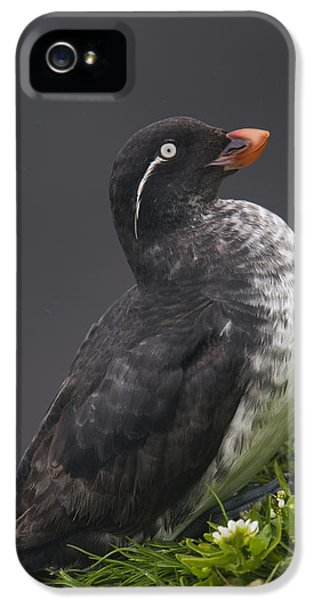 Parakeet Auklet Sitting In Green IPhone 5 Case by Milo Burcham