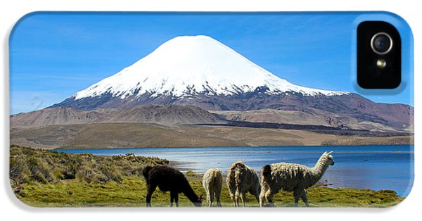 Llama iPhone 5 Case - Parinacota Volcano Lake Chungara Chile by Kurt Van Wagner