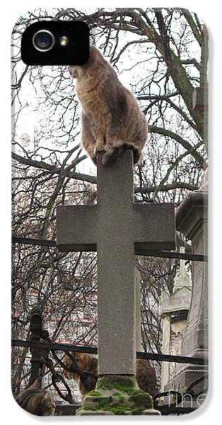 Paris Cemetery Cats - Pere La Chaise Cemetery - Wild Cats On Cross IPhone 5 Case