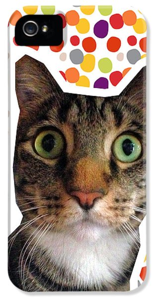 Party Animal - Smaller Cat With Confetti IPhone 5 Case