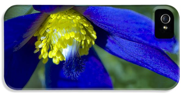 Pasque Flower Blue 3 IPhone 5 Case by Sharon Talson
