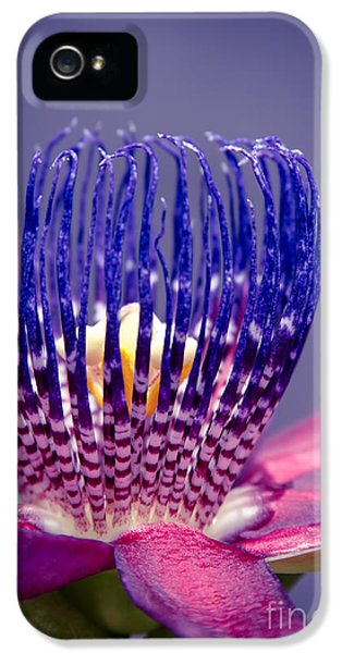 Stamens iPhone 5 Case - Passiflora Alata - Ruby Star - Ouvaca - Fragrant Granadilla -  Winged-stem Passion Flower by Sharon Mau