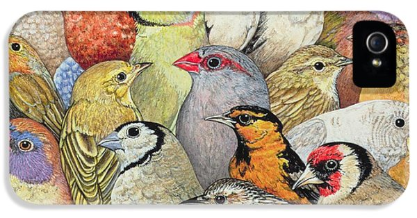 Parrot iPhone 5 Case - Patchwork Birds by Ditz