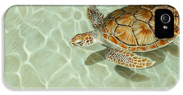 Turtle iPhone 5 Case - Patterns In Motion - Portrait Of A Sea Turtle by Dreyer Wildlife Print Collections