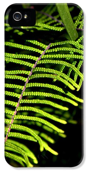 IPhone 5 Case featuring the photograph Pauched Coral Fern by Miroslava Jurcik
