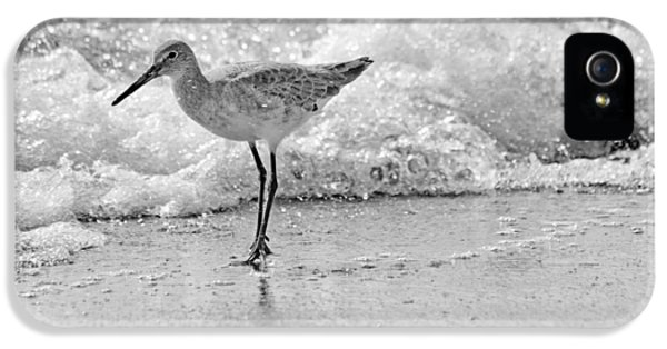 Sandpiper iPhone 5 Case - Pause by Betsy Knapp