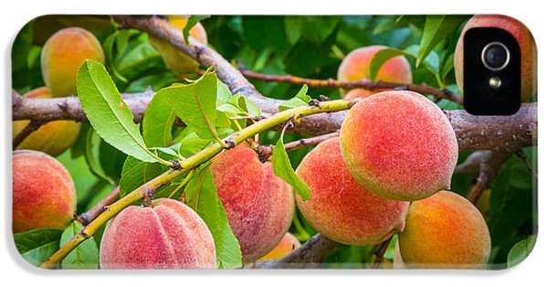 Peaches IPhone 5 Case by Inge Johnsson