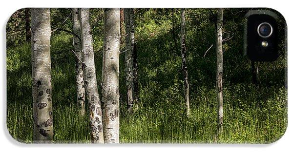Pecos Wilderness Aspen - Pecos New Mexico IPhone 5 Case