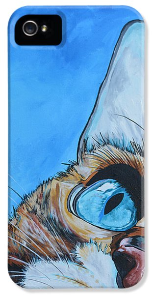 Cat iPhone 5 Case - Peek A Boo by Patti Schermerhorn