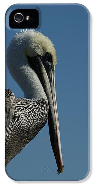 Pelican Profile 2 IPhone 5 / 5s Case by Ernie Echols