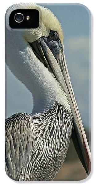 Pelican Profile 3 IPhone 5 Case by Ernie Echols