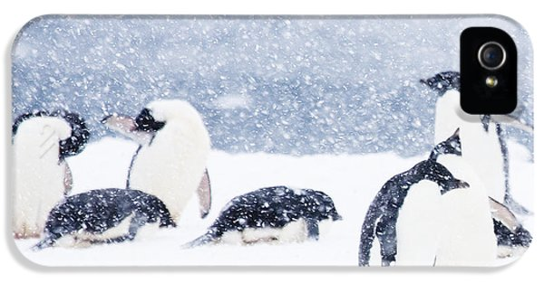 Penguins In The Snow IPhone 5 / 5s Case by Carol Walker