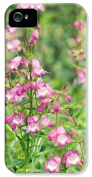 Penstemon 'pink Endurance' Flowers IPhone 5 Case by Adrian Thomas