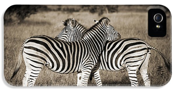 Zebra iPhone 5 Case - Perfect Zebras by Delphimages Photo Creations