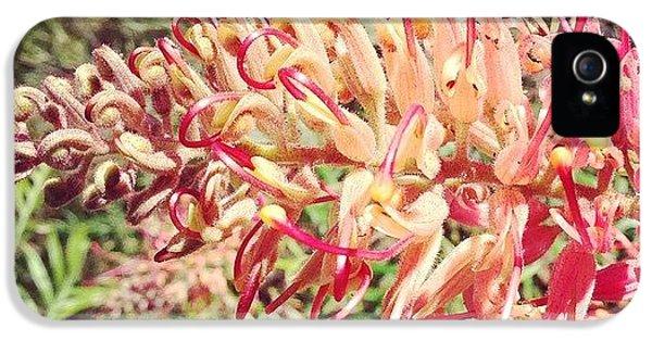 Decorative iPhone 5 Case - Australian Grevillea Flower by Sinead Connell