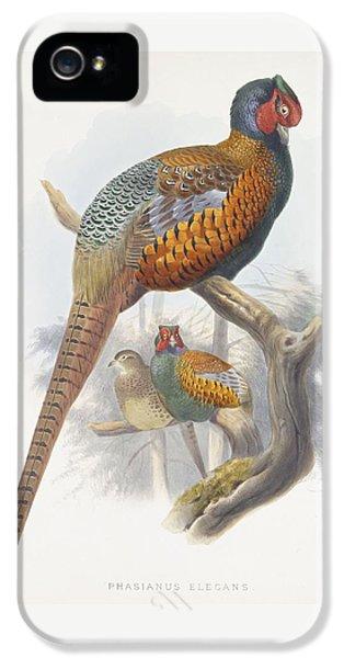 Phasianus Elegans Elegant Pheasant IPhone 5 / 5s Case by Daniel Girard Elliot