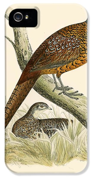 Pheasant iPhone 5 Case - Pheasant by Beverley R Morris