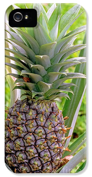 Pineapple Plant IPhone 5 Case by Millard H. Sharp
