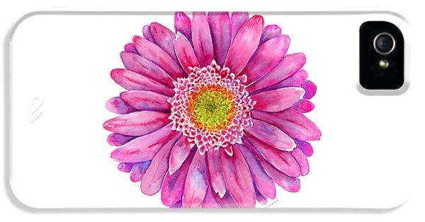 Pink Gerbera Daisy IPhone 5 Case