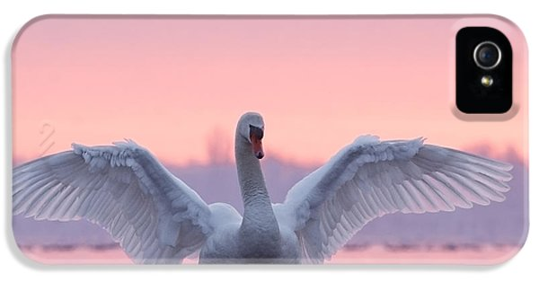 Pink Swan IPhone 5 / 5s Case by Roeselien Raimond