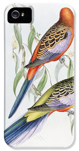 Parakeet iPhone 5 Case - Platycercus Adelaidae From The Birds Of Australia by John Gould