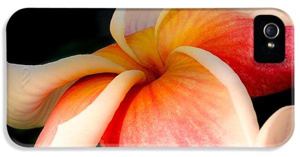 Plumeria Flower iPhone 5 Case - Plumeria by Joseph Smith