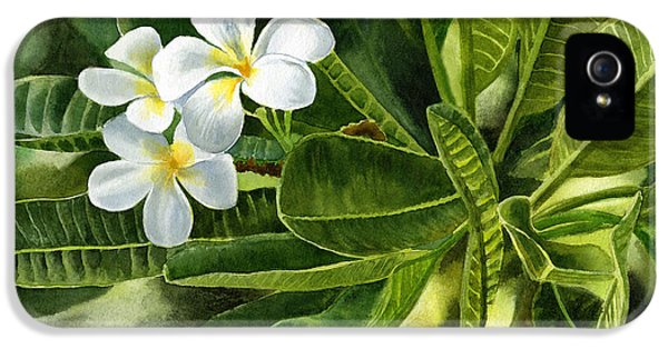 Plumeria Leaves IPhone 5 Case by Sharon Freeman