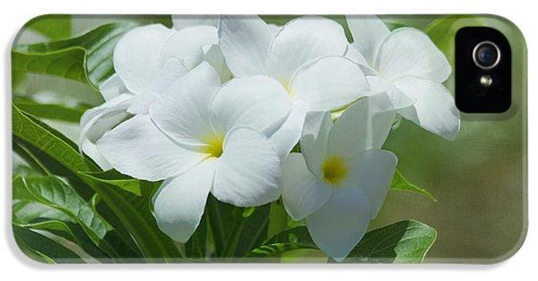 Plumeria Flower iPhone 5 Case - Plumeria - Tropical Flowers by Kim Hojnacki