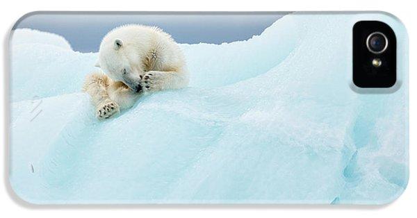Bear iPhone 5 Case - Polar Bear Grooming by Joan Gil Raga