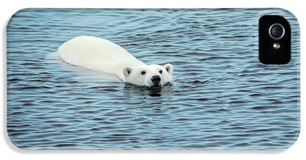 Polar Bear Swimming IPhone 5 Case by Peter J. Raymond