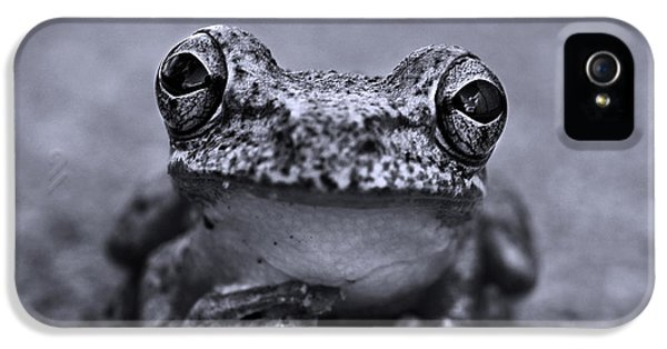 Amphibians iPhone 5 Case - Pondering Frog Bw by Laura Fasulo