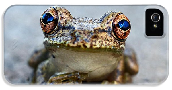 Pondering Frog IPhone 5 / 5s Case by Laura Fasulo