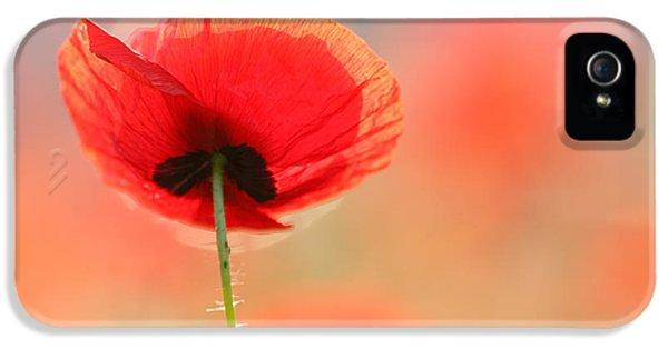 Poppy Dream IPhone 5 Case by Roeselien Raimond