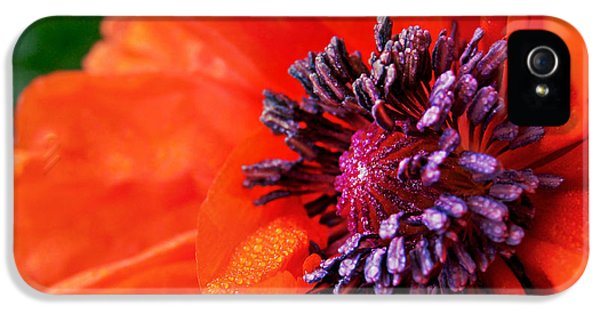Poppy's Purple Passion IPhone 5 Case by Bill Pevlor