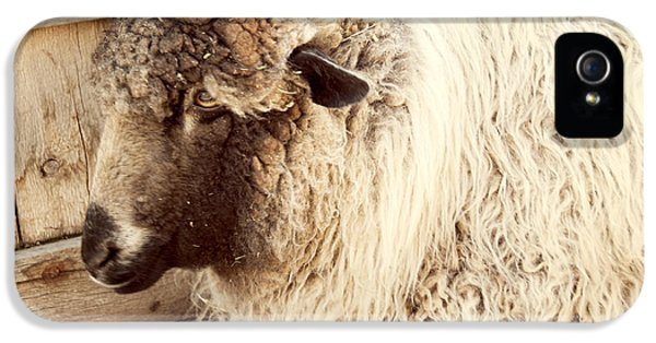 Portrait Of A Sheep IPhone 5 Case by Juli Scalzi
