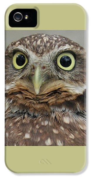 Portrait Of Burrowing Owl IPhone 5 Case by Ben and Raisa Gertsberg
