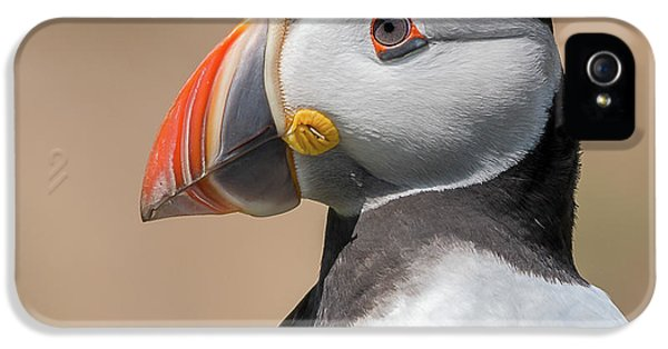 Puffin iPhone 5 Case - Portrait by Piotr Galus
