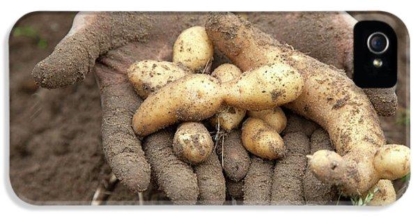 Potato Harvest IPhone 5 Case