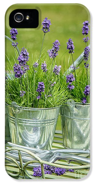 Garden iPhone 5 Case - Pots Of Lavender by Amanda Elwell