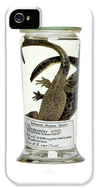 Preserved Newts IPhone 5 / 5s Case by Gregory Davies
