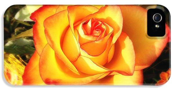 Pretty Orange Rose IPhone 5 Case